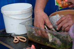 Eerst zouden de vissen de marinade moeten doorweken royalty-vrije stock foto's
