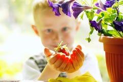 Eerste aardbei in de tuin Royalty-vrije Stock Foto's