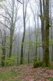 Eerste bladeren in het bos Stock Foto