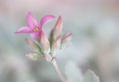 Eerste bloem Royalty-vrije Stock Foto
