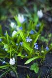 Eerste bloemen in de weide Royalty-vrije Stock Foto