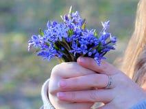 Eerste de lentebloemen royalty-vrije stock foto