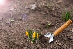 Eerste de lentespruiten Plaats voor tekst De ruimte van het exemplaar Het tuinieren concept De lente De achtergrond van de aard royalty-vrije stock afbeeldingen