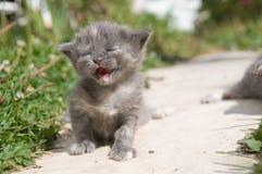 Eerste gang van kleine katjes Royalty-vrije Stock Foto