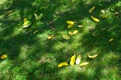 Eerste gele bladeren De zomer is over, hier is de Herfst royalty-vrije stock fotografie