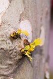 Eerste groene spruiten van de lente op een boomboomstam Royalty-vrije Stock Fotografie