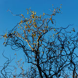Eerste Licht op de Winterboom royalty-vrije stock fotografie