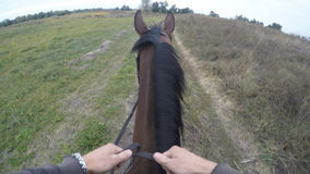 Eerste persoonsmening van het berijden van een paard Standpunt van ruiter het lopen bij hengst bij aard POV-motie Sluit omhoog Stock Foto's