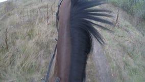 Eerste persoonsmening van het berijden van een paard Standpunt van ruiter het lopen bij hengst bij aard POV-motie Sluit omhoog stock videobeelden