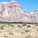 Eerste Sleep, het Rode Gebied van het Rots Nationale Behoud, Nevada stock afbeeldingen