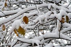 Eerste sneeuw Royalty-vrije Stock Fotografie