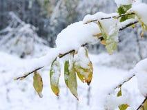 Eerste sneeuw Stock Afbeelding