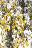 Eerste sneeuw Royalty-vrije Stock Afbeeldingen