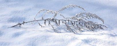 Eerste sneeuw Royalty-vrije Stock Foto