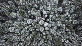 Eerste sneeuw in bos Russisch landschap stock videobeelden