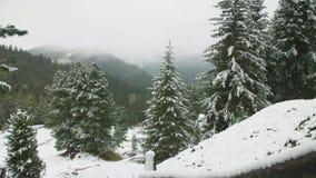 Eerste sneeuw in de bergen stock video