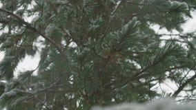 Eerste sneeuw in de bergen stock videobeelden
