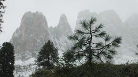 Eerste sneeuw in de bergen stock footage