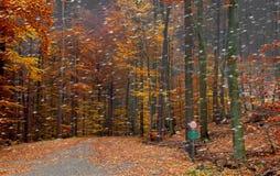 Eerste sneeuw in het bos Royalty-vrije Stock Foto