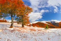 Eerste sneeuw in het bos in de bergen Zonnige november dag Royalty-vrije Stock Fotografie