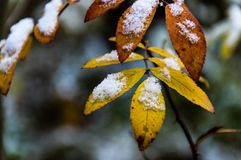Eerste sneeuw in het ochtendbos stock fotografie
