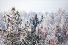 Eerste sneeuw in het park Het landschap van de winter Stock Foto