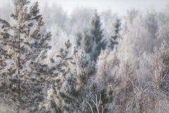Eerste sneeuw in het park Het landschap van de winter Stock Afbeelding