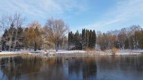 Eerste sneeuw in het stadspark met eenden op een ijzige behandelde vijver en een bank stock video