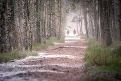 Eerste sneeuw in hout bij daglicht met groene pijnbomen, Stock Foto