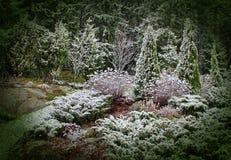 Eerste sneeuw in mystic tuin Royalty-vrije Stock Foto