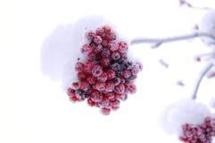 Eerste sneeuw nieuw seizoen Royalty-vrije Stock Foto's
