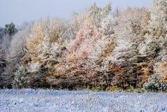 Eerste Sneeuw op Autumn Trees Stock Afbeeldingen