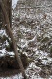 Eerste sneeuw op bemoste boomstam stock foto's