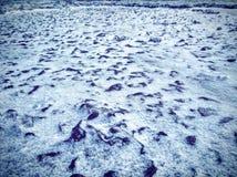 Eerste sneeuw op de rotsen stock afbeeldingen