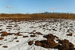 Eerste sneeuw op het gebied. Royalty-vrije Stock Afbeeldingen