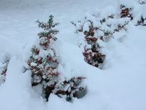 Eerste Sneeuwval Stock Foto's