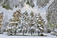 Eerste sneeuwval in het stadspark Royalty-vrije Stock Foto