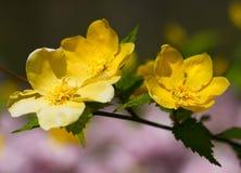 Eerste teken van de lente Royalty-vrije Stock Foto's