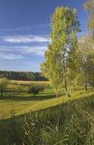 Eerste tekens van de herfst Stock Foto