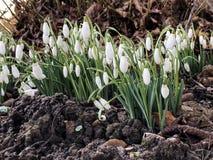 Eerste tekens van de lente royalty-vrije stock foto