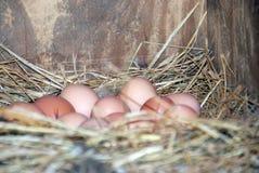 eerste van de Eieren Stock Afbeelding
