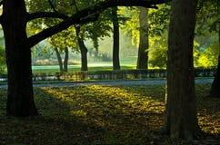 Eerste zonnestralen bij ochtend in Topcider-park, Belgrado Stock Foto