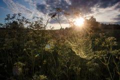 Eerste zonstralen over gebied Royalty-vrije Stock Afbeeldingen