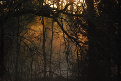 Eerie Morning Royalty Free Stock Photo