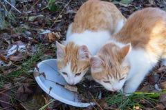 Eet dakloos wit-rood katje twee greedily het brood van plas royalty-vrije stock fotografie