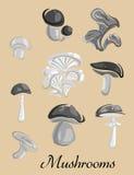 Eetbaar en giftig bospaddestoelenaanplakbiljet Royalty-vrije Stock Afbeeldingen