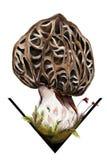 Eetbare en volwassen morchella esculenta paddestoel stock afbeelding