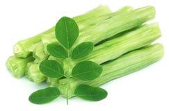 Eetbare moringa oleifera met groene bladeren Stock Afbeeldingen