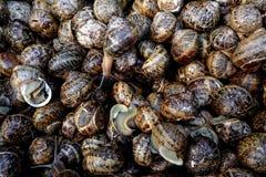Eetbare slakken Stock Foto