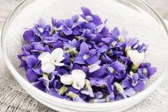 Eetbare viooltjes in kom Stock Afbeelding